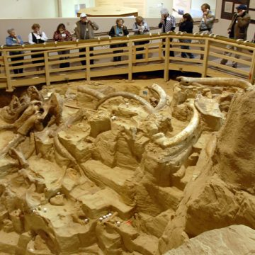 Mammoth Site, Hot Springs