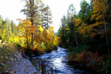 Spearfish Canyon Porcupines