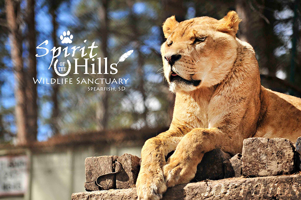 Spirit of the Hills Wildlife Sanctuary